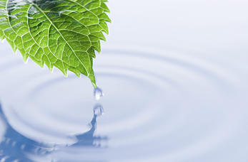water-leaf-drop